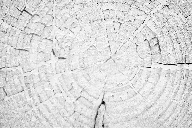 树桩有黑白年轮的背景 库存照片