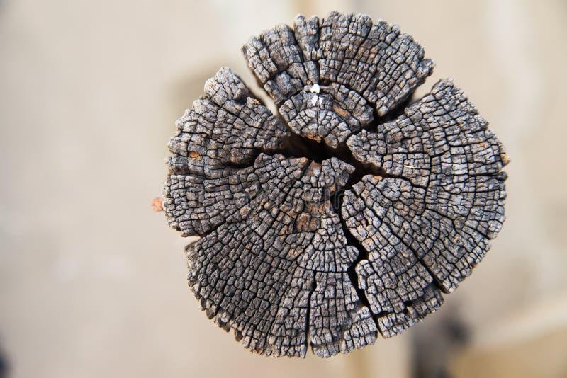 树桩木纹理  免版税库存图片