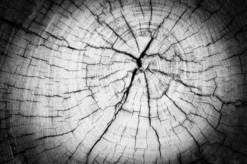 树桩纹理与增加的渐晕的 免版税图库摄影