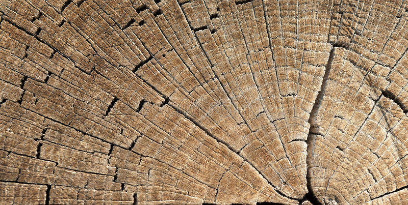 树桩纹理 免版税库存照片