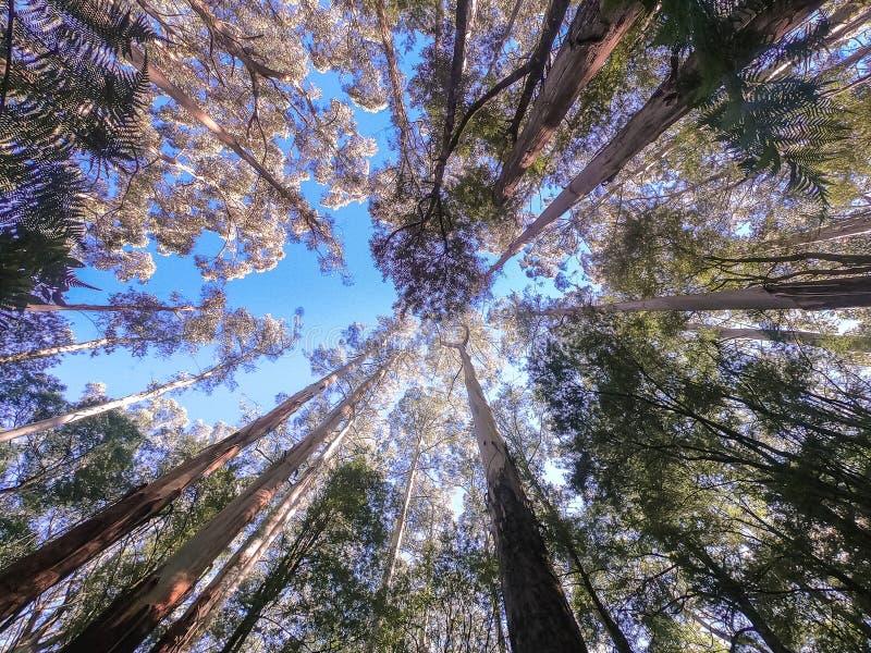 树梢机盖从下面 免版税库存图片