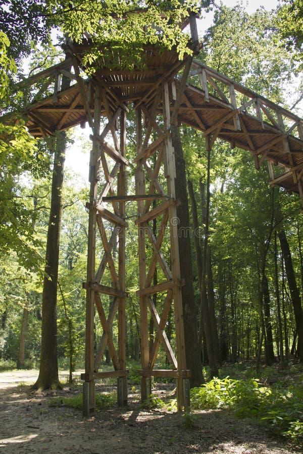 树梢步行在匈牙利 免版税库存图片