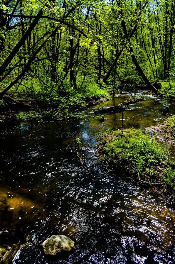 树森林上色自然区别河 库存图片