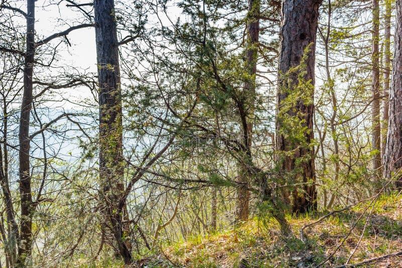 树横渡的分支在意大利的乡下 库存照片