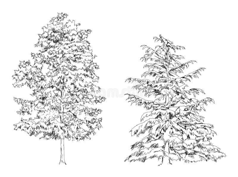 树橡木桦树冷杉和杉木 剪影汇集 皇族释放例证