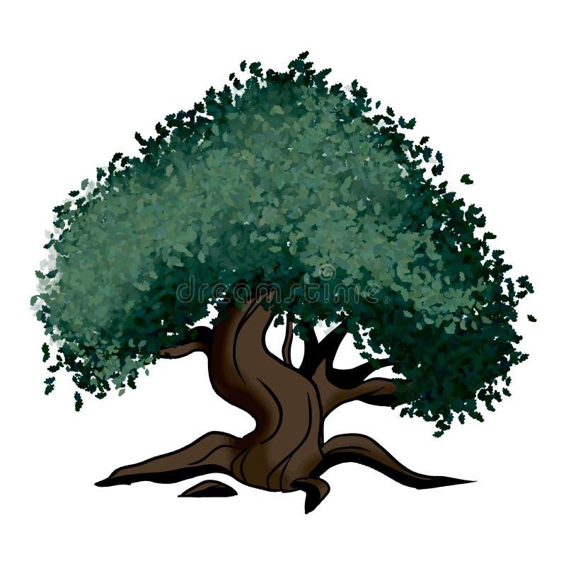 树橡木 皇族释放例证