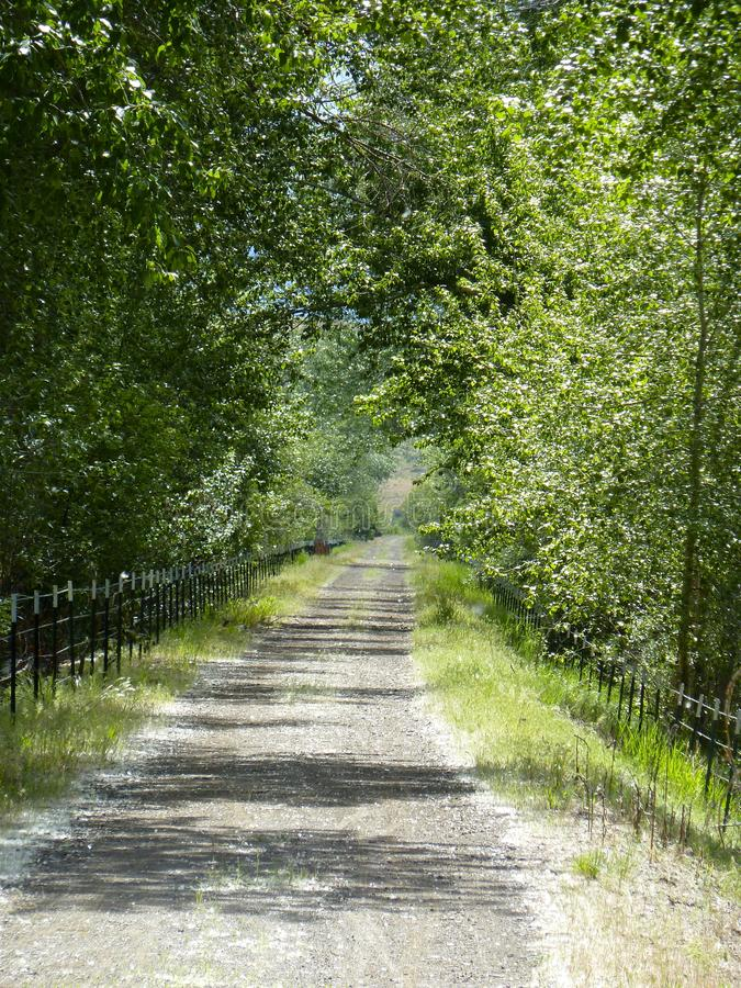 树毗邻的不尽的土路 免版税库存图片