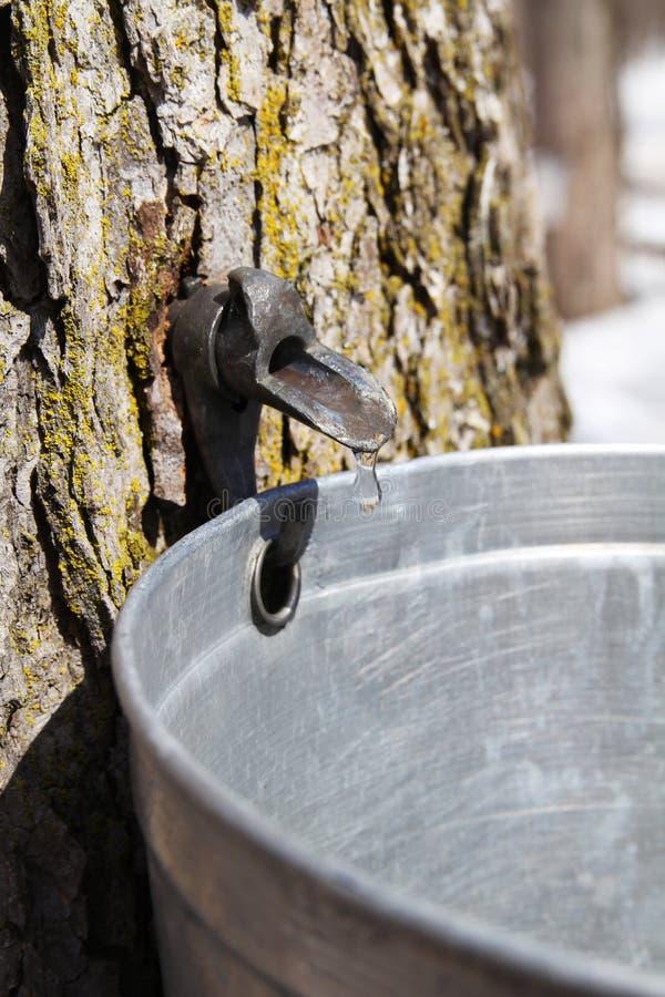 树汁接近  免版税库存照片