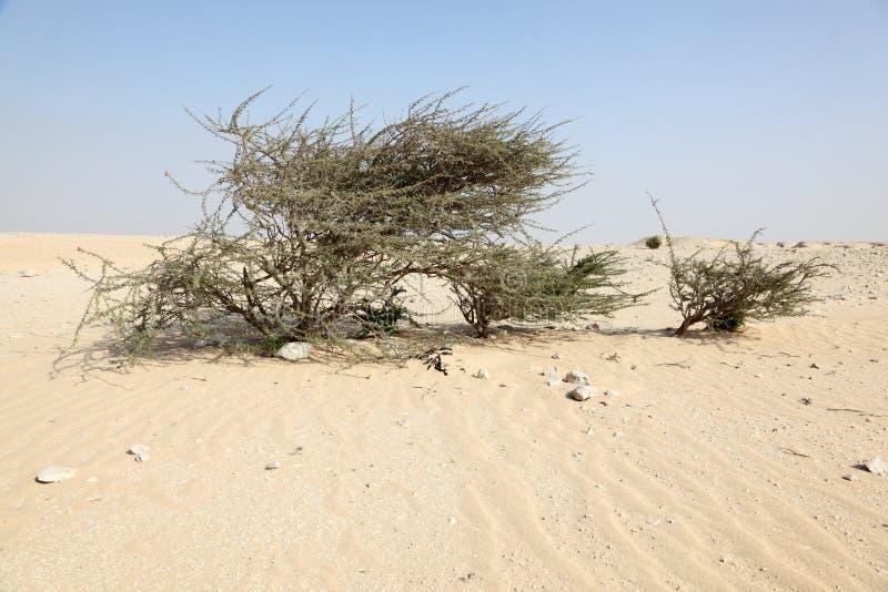 树沙漠 免版税库存图片