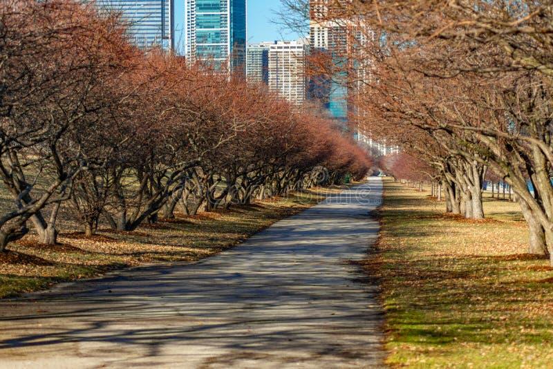 树沿密执安湖岸的被排行的足迹在芝加哥 图库摄影