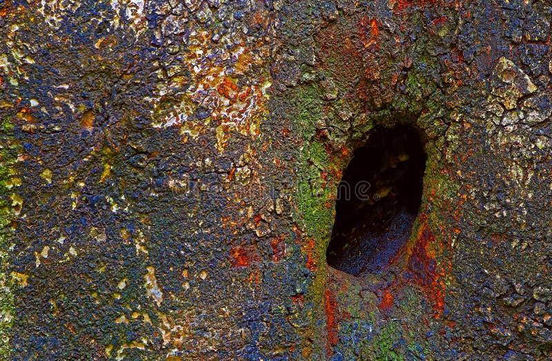 树洞鸟巢 免版税库存图片