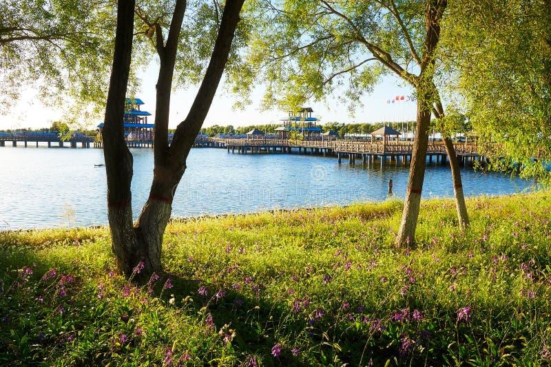 Download 树湖边 库存图片. 图片 包括有 可爱, 日落, 湖边, 艺术, 浏览, 相当, 城市, 观光, 贿赂, 天空 - 59104443