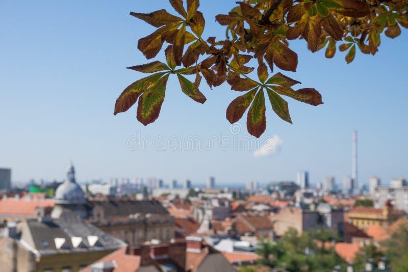 树特写镜头有在萨格勒布老市中心屋顶的看法在背景中 库存照片