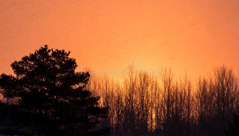 树现出了轮廓在与雪剥落的日出在天空中 库存照片