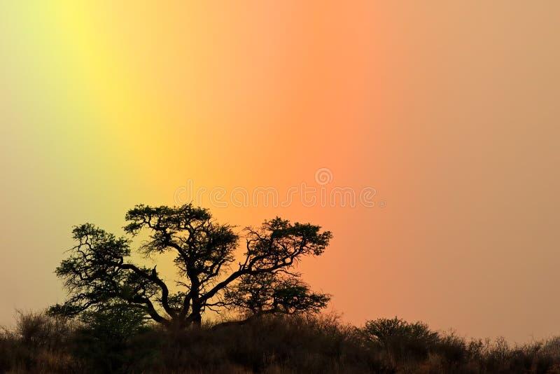 树现出轮廓反对彩虹天空 免版税库存图片