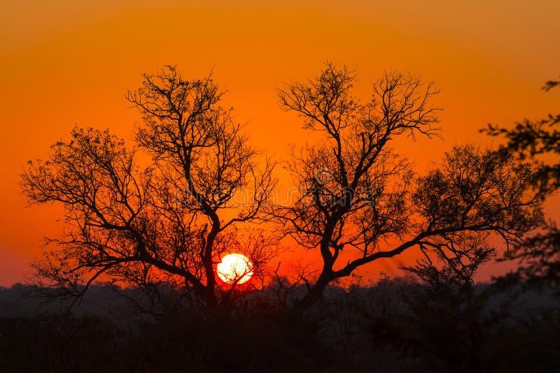 树现出轮廓反对五颜六色的天空6 库存照片
