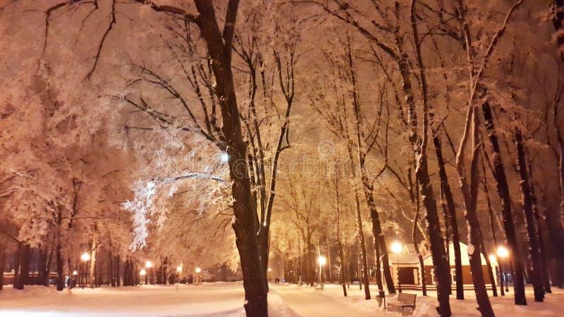 树白色分支在公园-哈尔科夫在2017年1月 免版税图库摄影