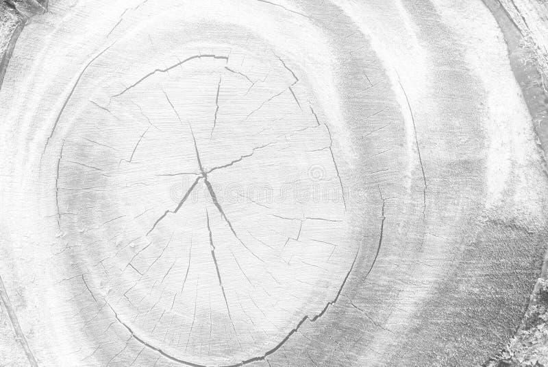 树白色切口树干  库存图片