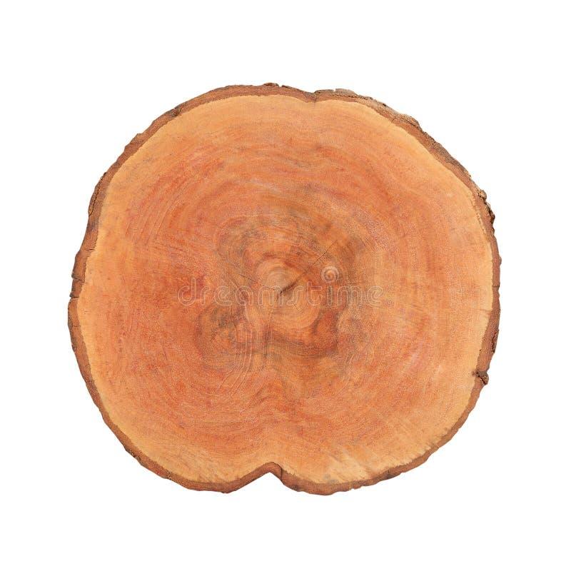 树白色背景的详细的截面图 库存图片