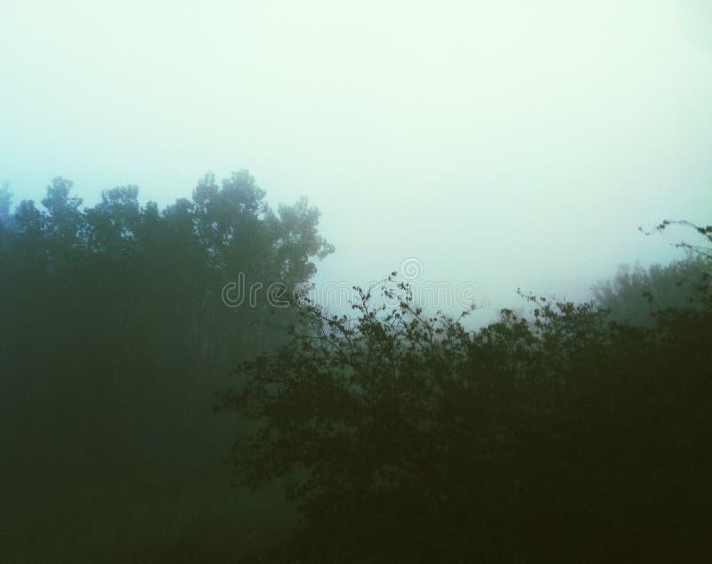 树的一有雾的天 库存图片