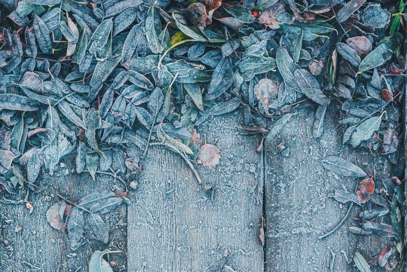 树的下落的叶子在木背景结冰了 免版税库存图片