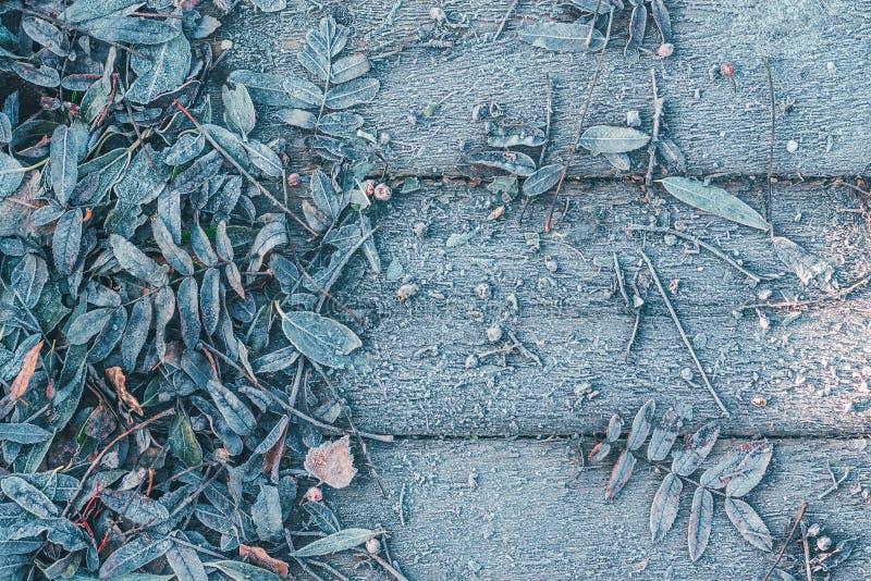 树的下落的叶子在木背景结冰了 免版税库存照片