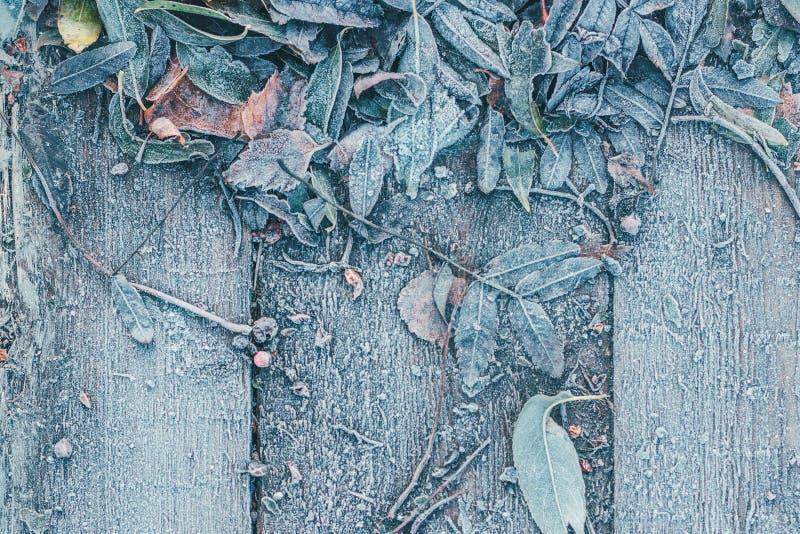 树的下落的叶子在木背景结冰了 图库摄影