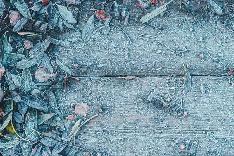 树的下落的叶子在木背景结冰了 库存照片