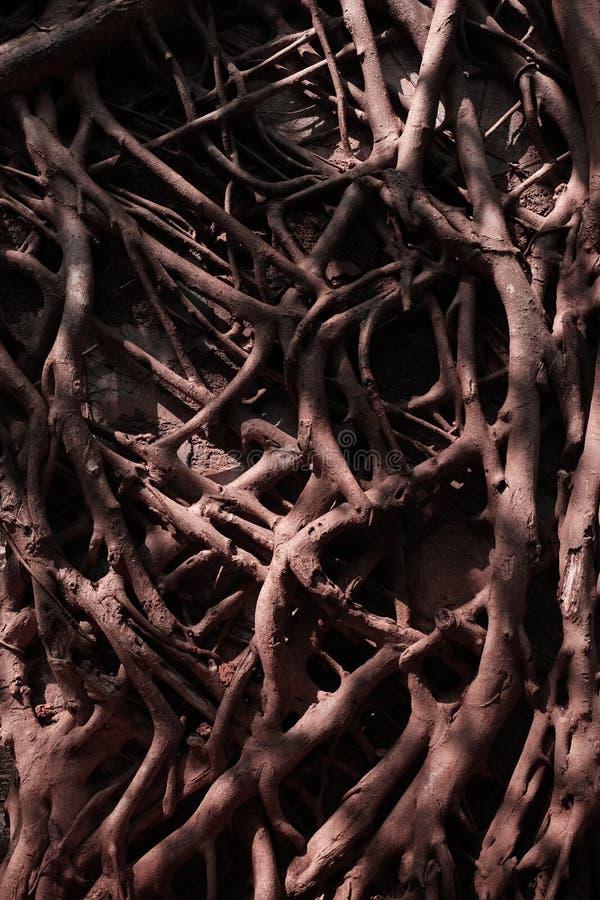 树的分支在墙壁上的 免版税库存照片