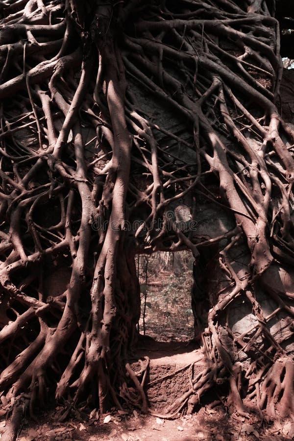 树的分支在墙壁上的 免版税图库摄影