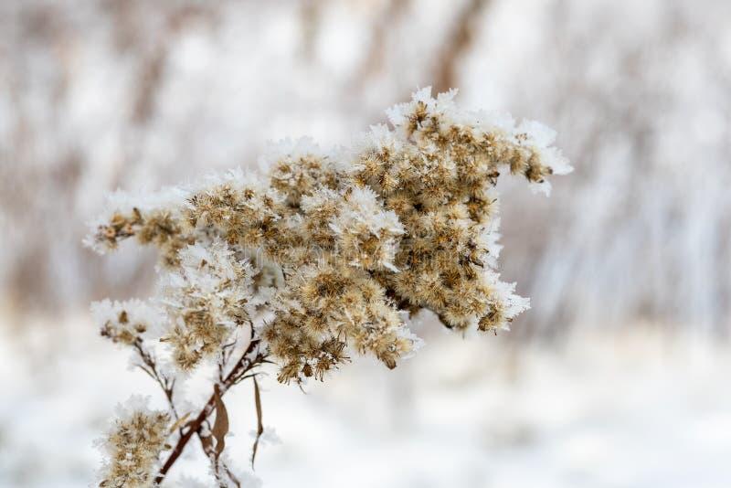 树的分支用白色霜、冬天和寒冷报道 免版税图库摄影