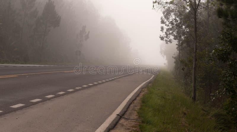 树的剪影在雾02中的一根路灯柱 免版税库存照片
