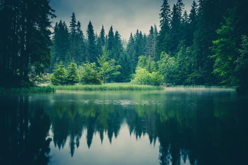 树的反射在有雾的,斯洛伐克森林湖 库存图片