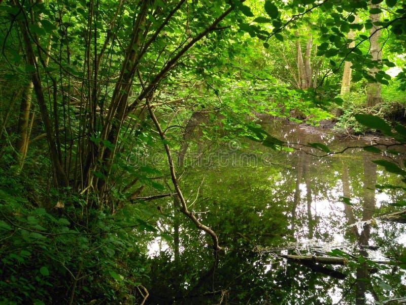 树的反射在水中 库存图片