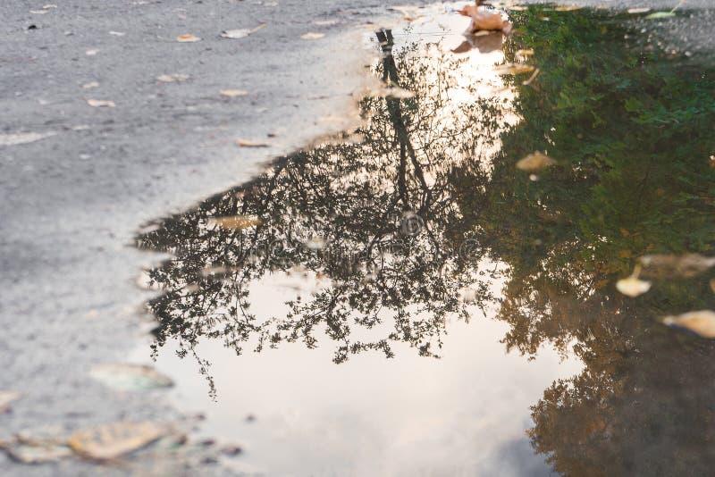 树的反射在水坑的在沥青 选择聚焦 免版税库存照片