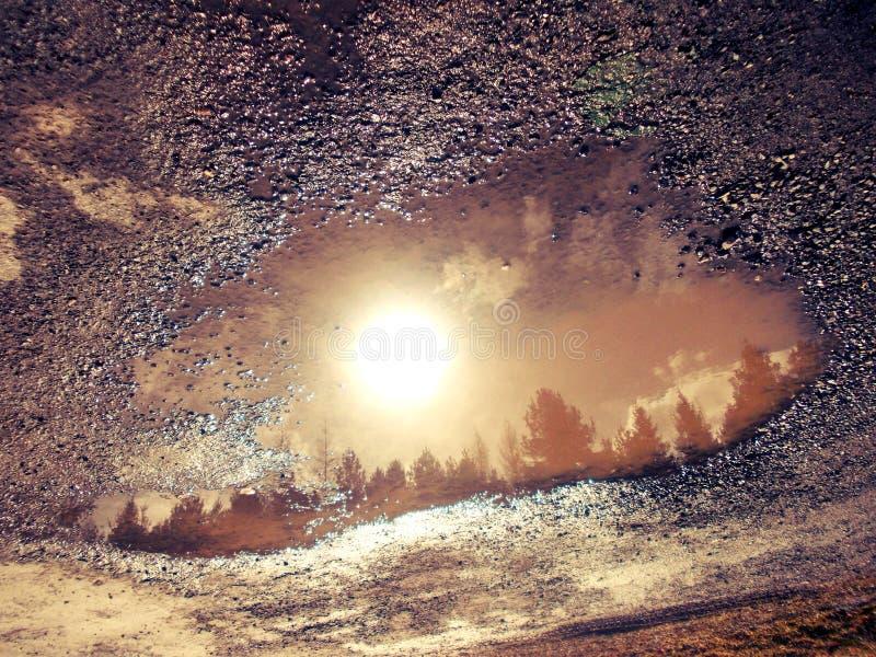 树的反射在水池的 库存图片