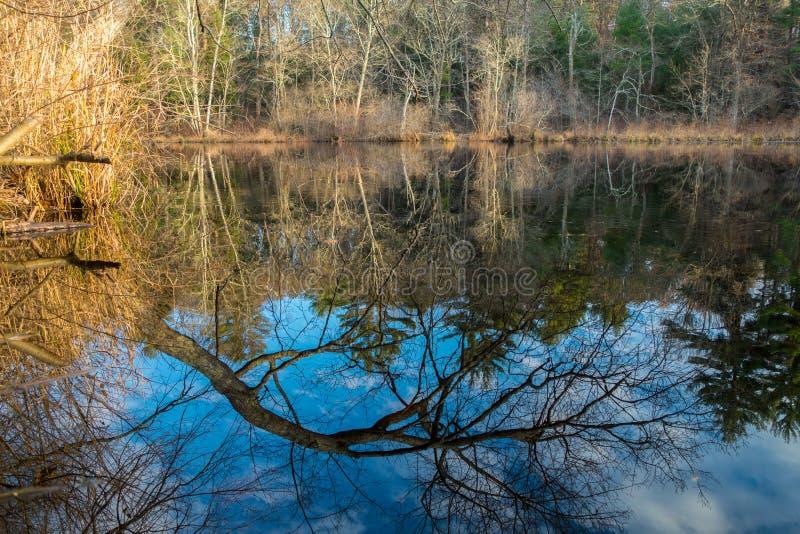 树的反射在湖 库存照片