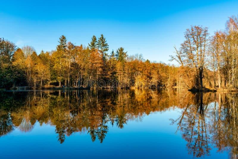 树的反射在湖Dammsmühle 库存照片
