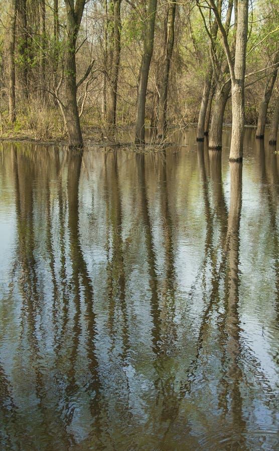 树的反射在表面的多瑙河1 库存图片