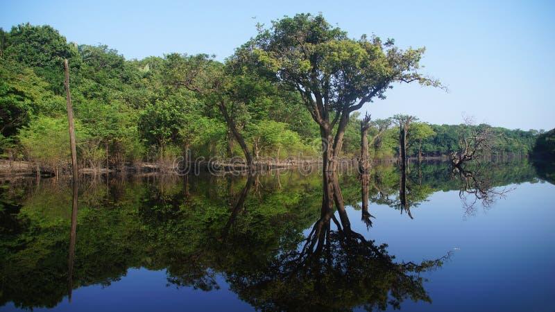 树的反射在雨林的河在Amazonas,巴西 图库摄影