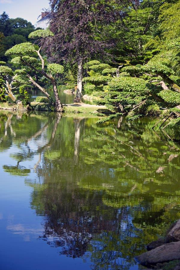 树的反射沿蓝色湖的 库存照片