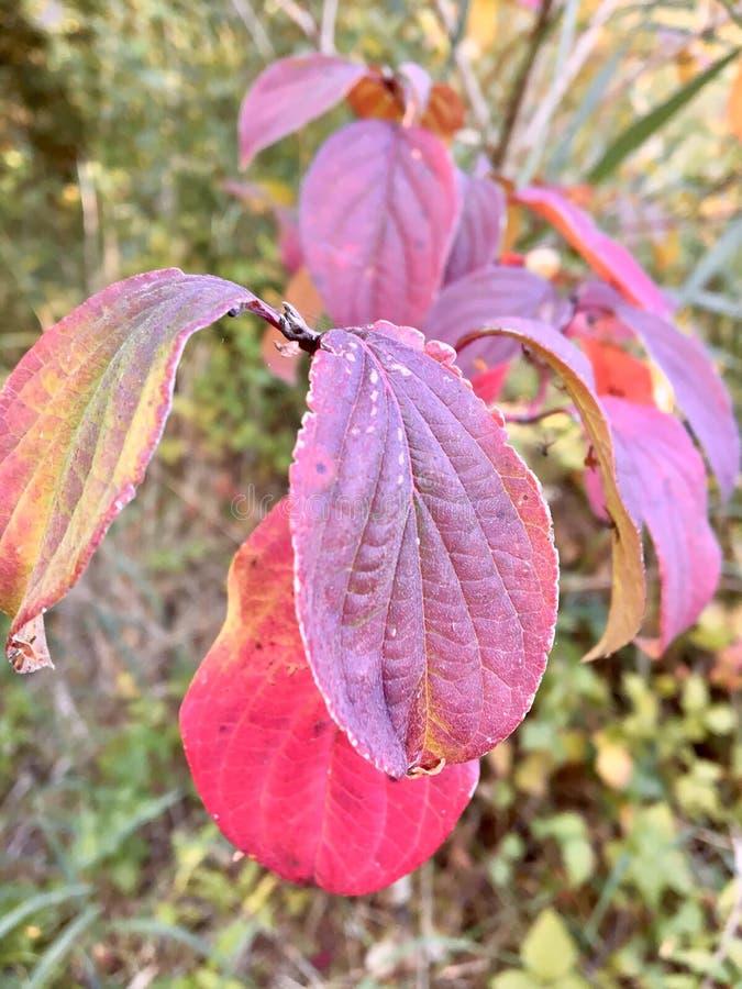 树的叶子在秋天泽沃德 免版税库存图片
