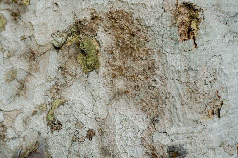 树的壳表面的特写镜头 明显地看见样式 免版税库存照片