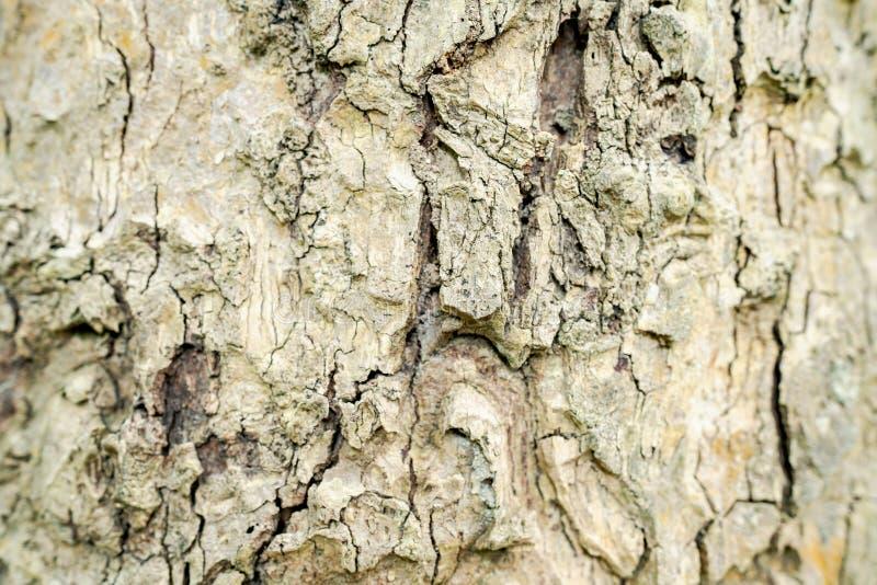 树的壳表面的特写镜头 明显地看见样式 库存照片