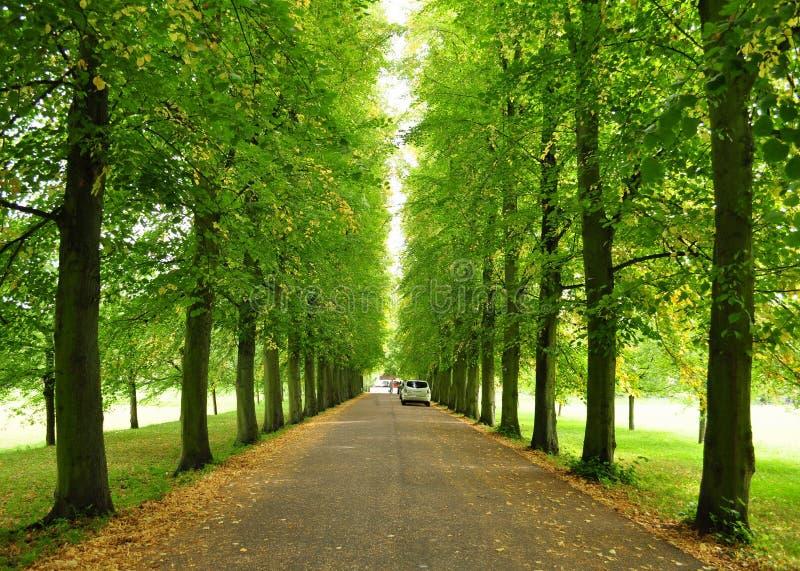 树的对称样式 免版税库存图片