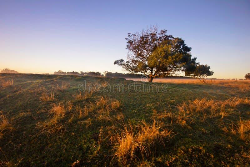 树的日出景观 雾色地 库存图片