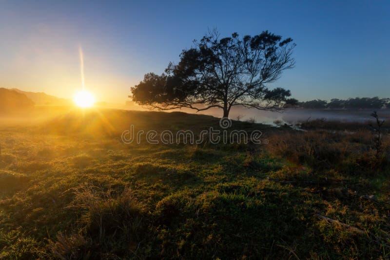 树的日出景观 雾色地 免版税库存照片