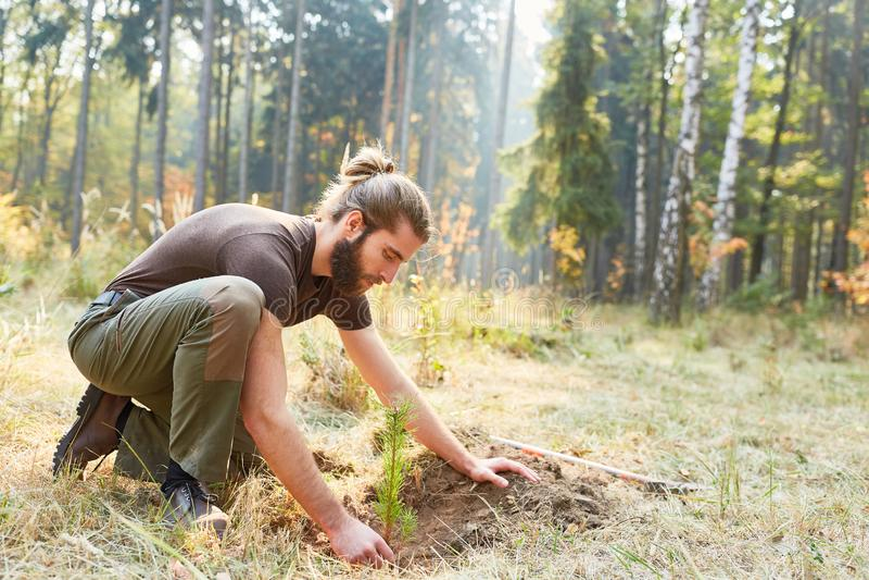 树的植物林务员重新造林的 免版税库存图片