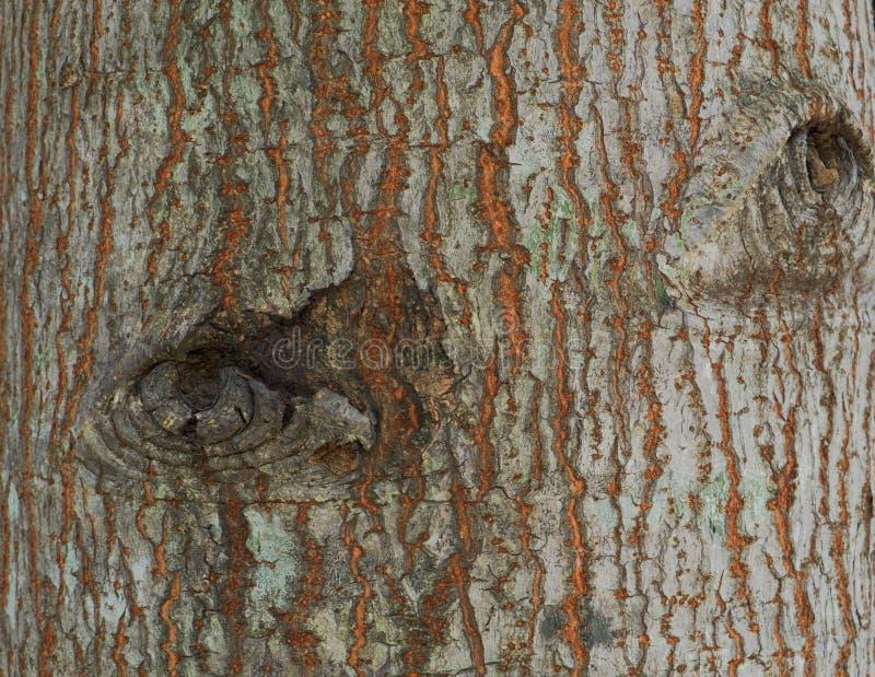 树的毛面 库存照片