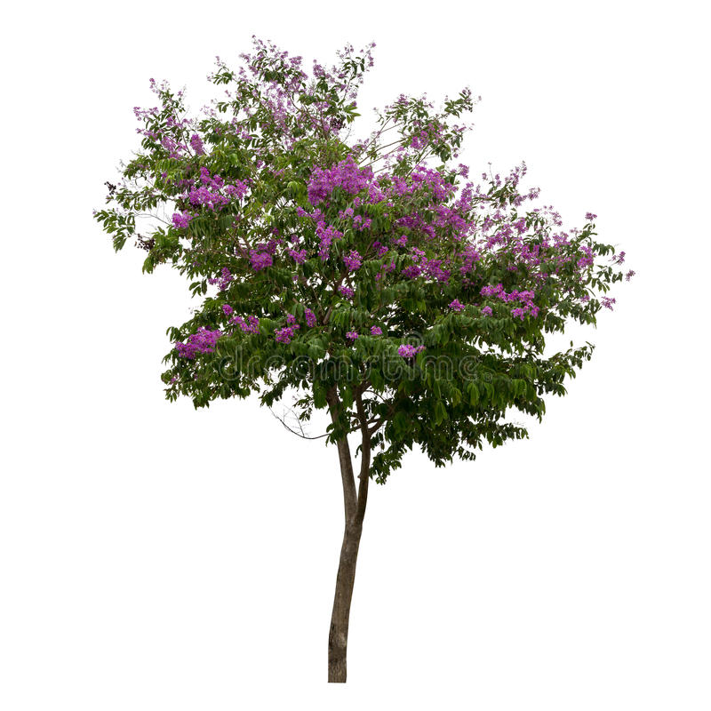 树的汇集与在白色背景隔绝的紫色花的 图库摄影